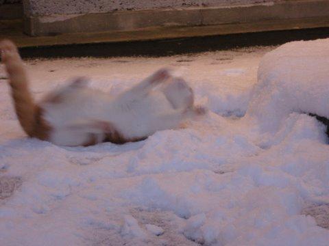 Snøengler?